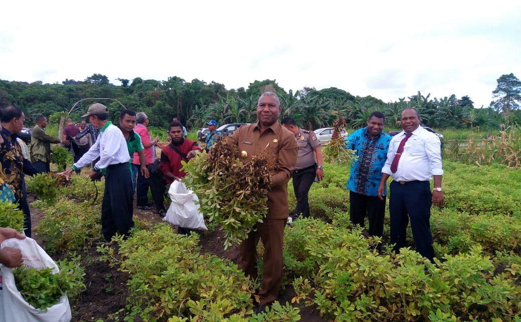 Gubernur Papua Barat, Drs Dominggus Mandacan Didampingi 3 Kepala Daerah melakukan panen hasil kebun percontohan di Daerah Abresso, Kabupaten Mansel, Jumat (6/7/2018)