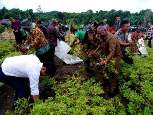 Gubernur Papua Barat melakukan panen kacang dan jagung di Kebun Percontohan Tim Penggerak PKK Kabupaten Manokwari Selatan, Jumat (6/7/2018)